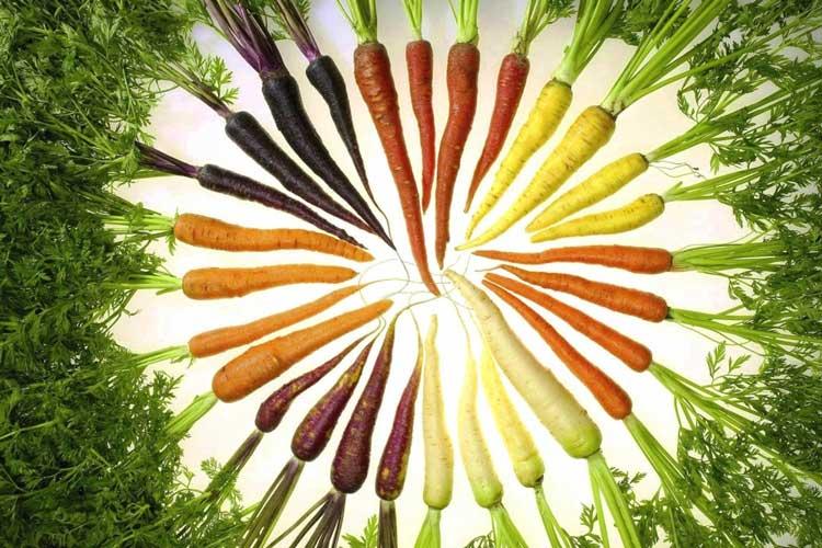 De la couleur de la carotte